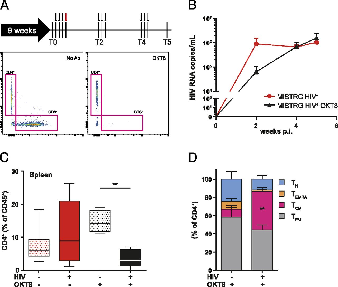 Differential Dynamics of HIV Infection in Humanized MISTRG versus
