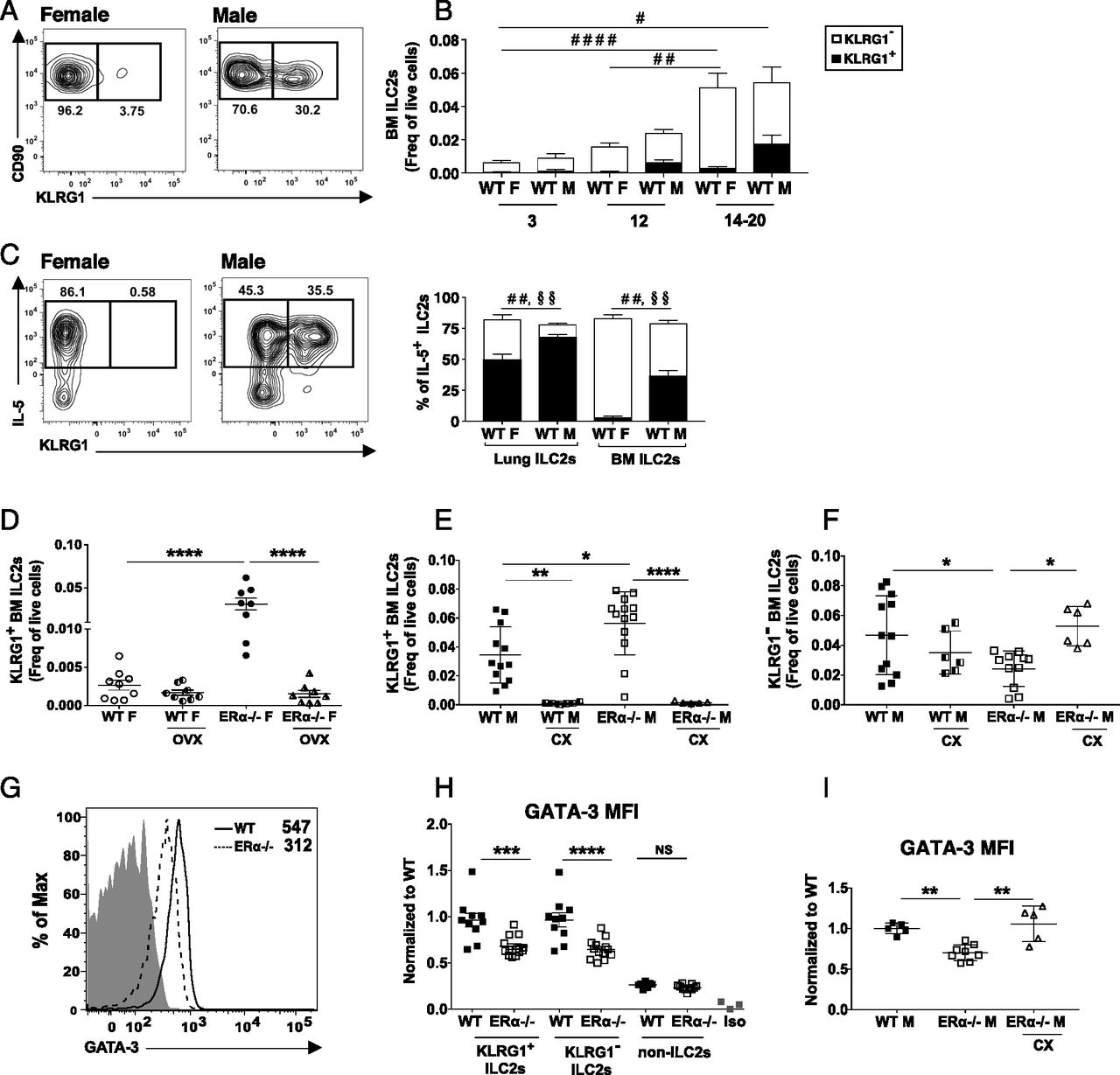 A Major Population of Functional KLRG1– ILC2s in Female