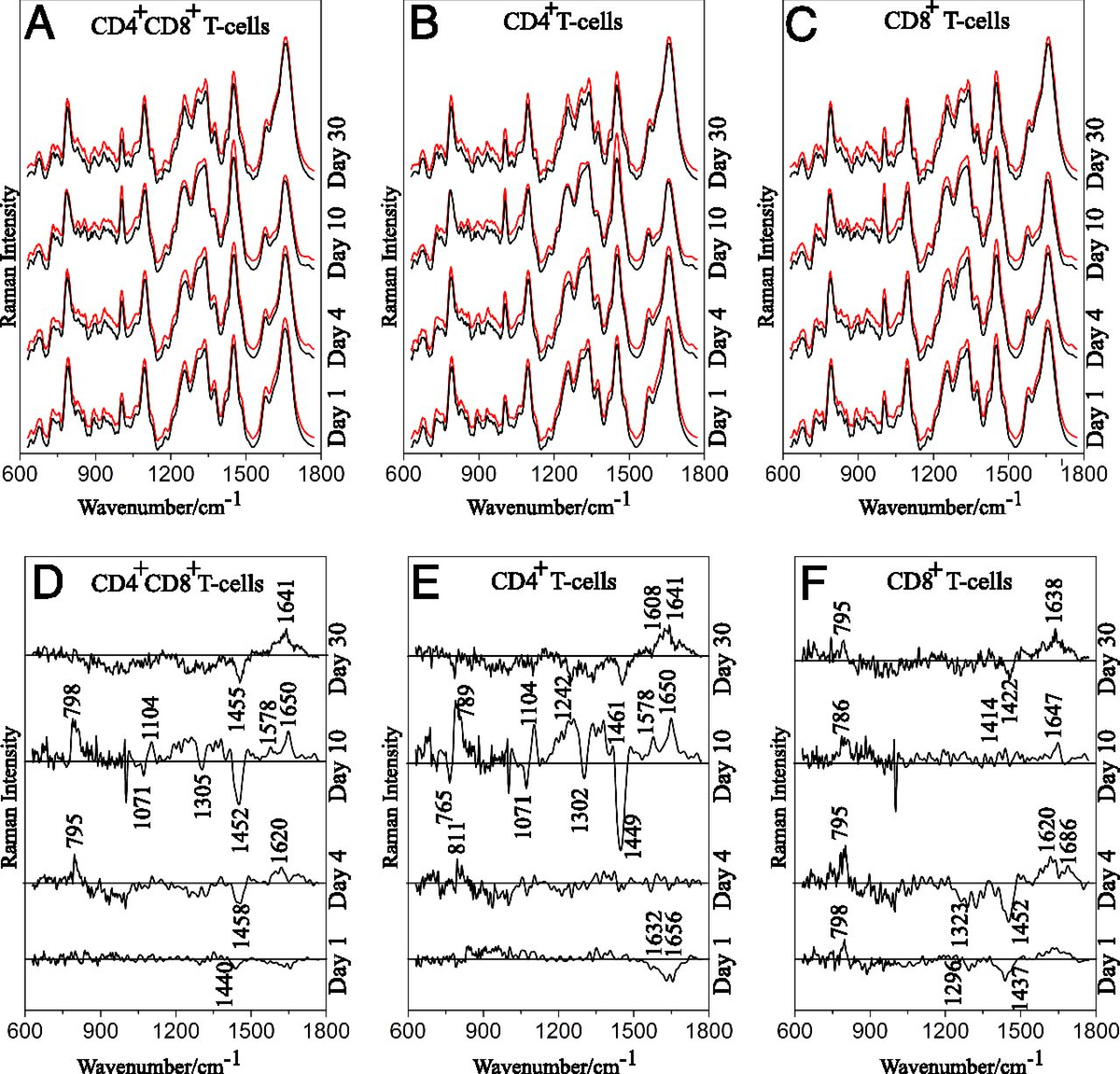Raman Spectroscopy Follows Time-Dependent Changes in T